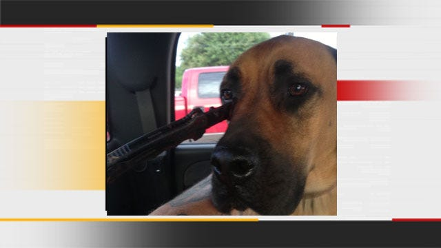 GRAPHIC: Dog Stabbed In Face Trying To Protect Property In OKC