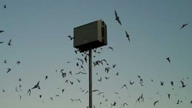 Experts Say Bat Houses Can Cut Down Mosquito Population In Oklahoma