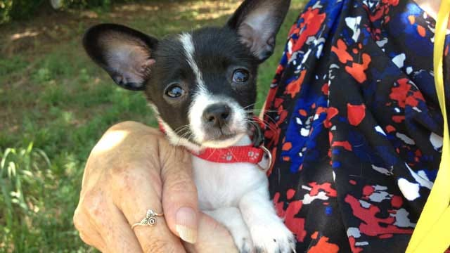 Puppy Recovers After Being Thrown Against Wall By OKC Woman