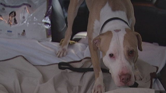 Dog Ordered By Edmond Man To Attack Woman Gets Second Chance In Life