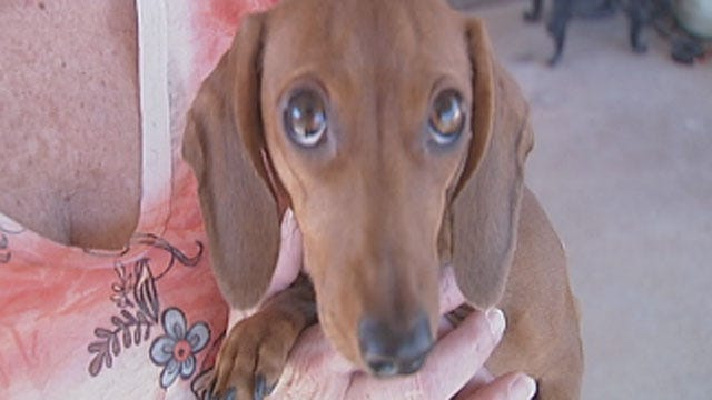 Chickasha Family Devastated After Dog Nearly Killed By Coyote