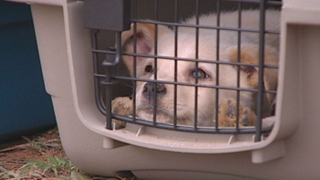 Oklahoma Dogs Find New Life Across State Lines