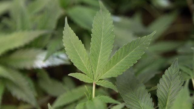 Oklahoma Medical Marijuana Authority Expands Recall Of Moon Mix Products