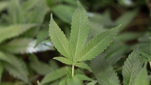 State Lawmaker Pushes To Legalize Medical Marijuana