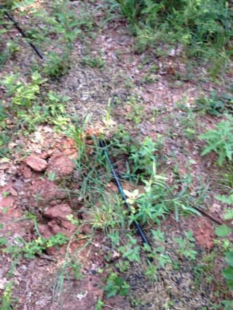 Large Marijuana Cultivation Operation Discovered In Logan County