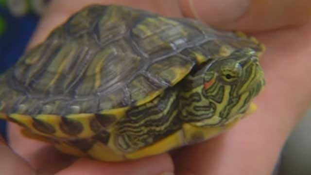 Plaza Towers First Graders Reunited With Classroom Turtle