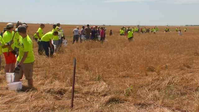 Dozens Of Volunteers Comb, Clean El Reno Area Wheat Fields