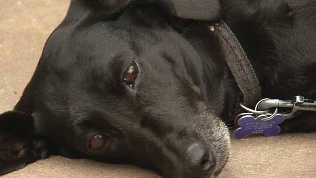 Guthrie Man's Missing Dog Turns Up In Iowa After Hopping Train