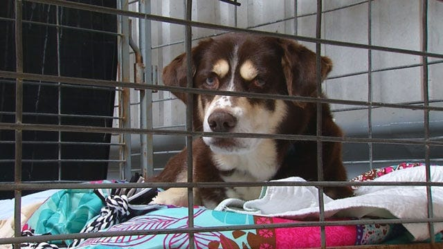 Adoption Day Held For Pets Displaced By May Tornadoes