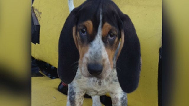 Ada Family Buys Rabid Puppy, Fears Others Were Exposed
