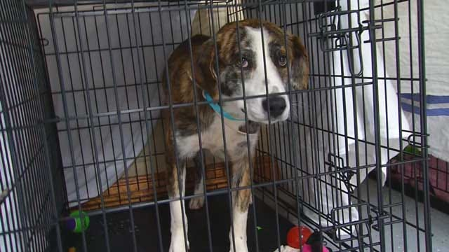 Oklahoma Storm Pets Still Searching For Their Homes