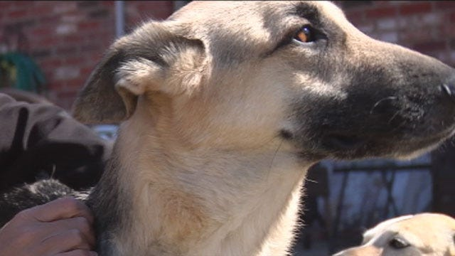 Dog Thrown Off OKC Bridge Continues On Road To Recovery