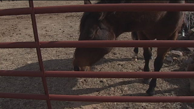 Debate Heats Up On Controversial Oklahoma Horse Slaughter Bill