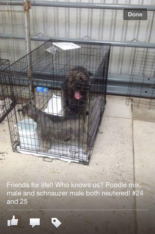 Tornado Victim Reunited With Dog