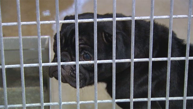 OKC Dog Owner Could Be Charged After Nearly-Dead Pets Found