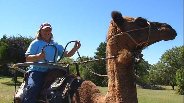 Help 'Clyde The Camel' Over The Hump In Guthrie