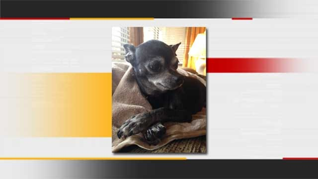 Missing Chihuahua Reunites With Family 2 Years Later