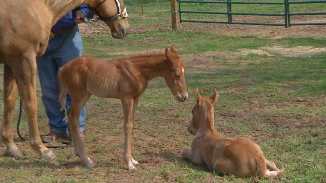 Former Barrel Racing Horse Gives Birth to Twins