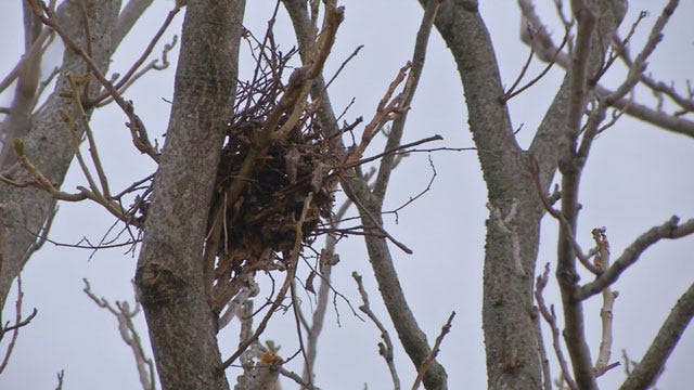 Midwest City Hopes To Scare Off Foul Fowl