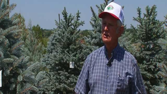 Oklahoma Tree Farmers Celebrating Rainy Summer