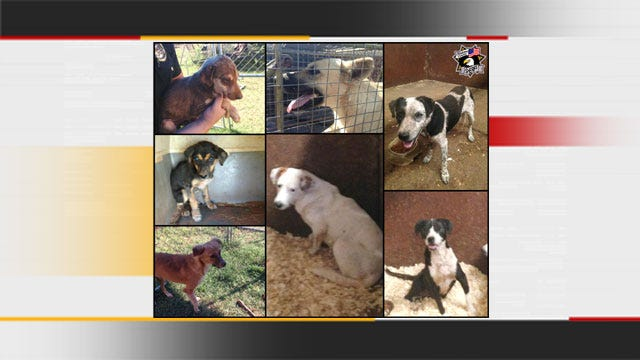 Sheriff's Office Seeks Homes For Abandoned, Malnourished Dogs In Luther