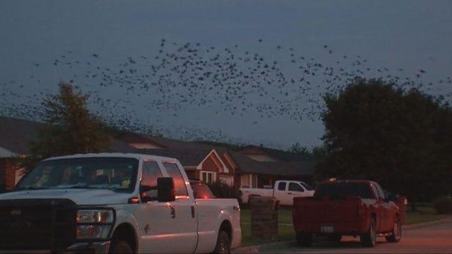 El Reno Takes Unique Approach To Remedy Bird Problem