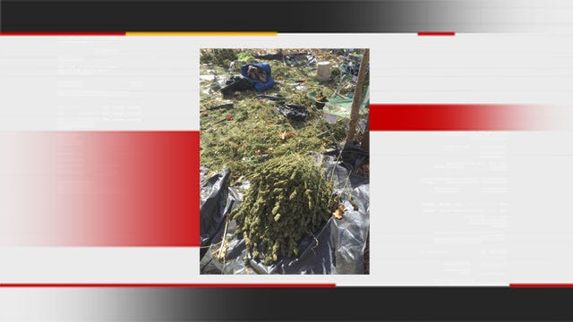 Authorities Seize Processed Pot From Johnston Co. Growing Operation