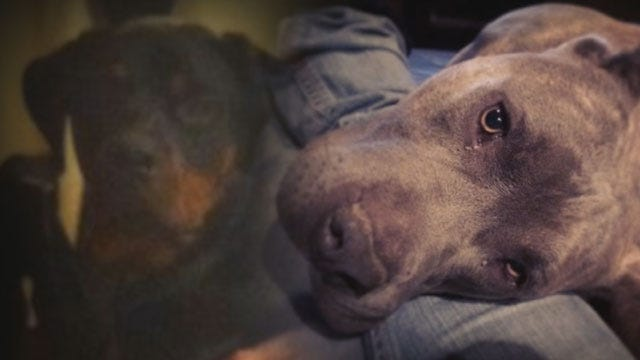 Yukon Family Fighting To Keep Dogs From Being Euthanized