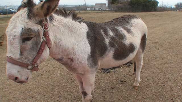Red Dirt Diaries: Pin The Name On The Donkey In OKC