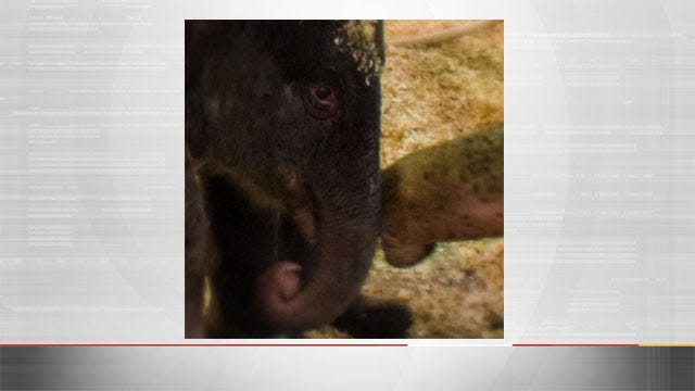 OKC Zoo Celebrates Birth Of Asian Elephant