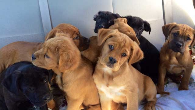 Puppies Saved From Burning Cashion House Looking For Forever Homes