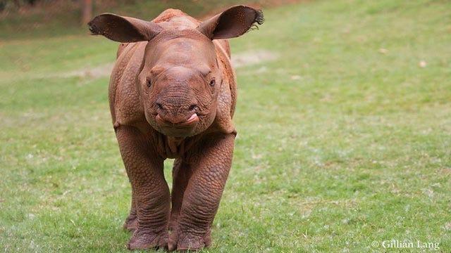 OKC Zoo Names Baby Indian Rhino