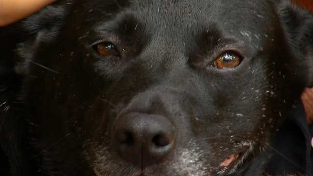 Molly, An Oklahoma Dog No One Wanted Now Has A Home With A Purpose