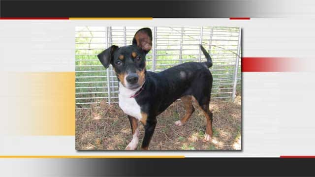 OKC Animal Shelter Offers Half-Price Dog Adoptions To Ease Overcrowding