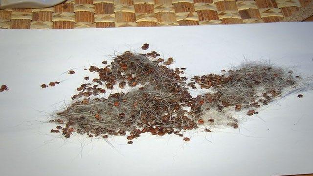 Wewoka Woman Says Animal Shelter Gave Her Dog Ticks