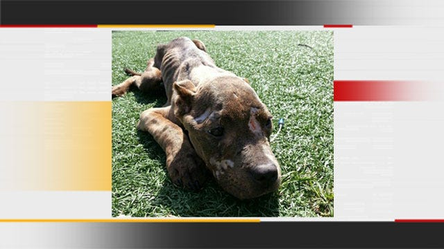 One Of Two Dogs, Found Severely Neglected In MWC, Dies