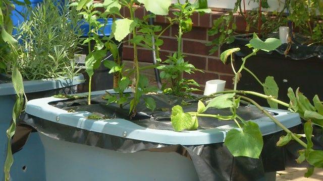 Oklahoma Inventor Creates Box To Make Gardening Easier