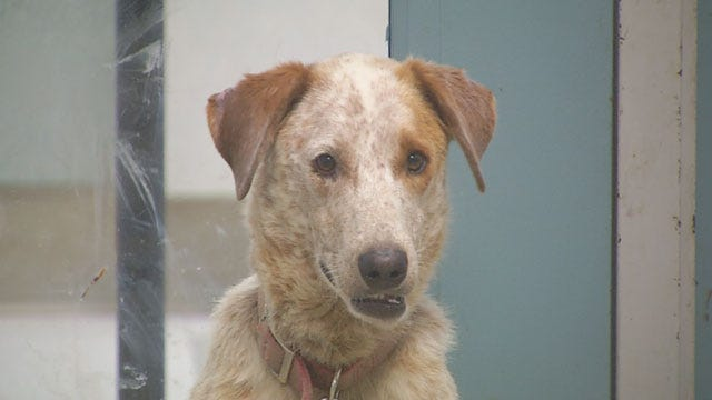 Oklahoma City Animal Shelter Sees An Influx Of Animals Because Of Fireworks