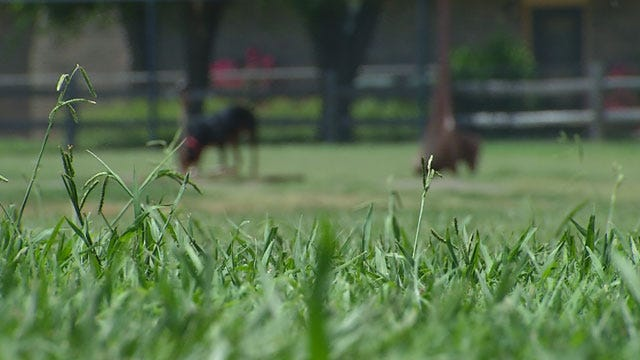Edmond Family Hopes City Will Revise Rules After Dog Park Attack