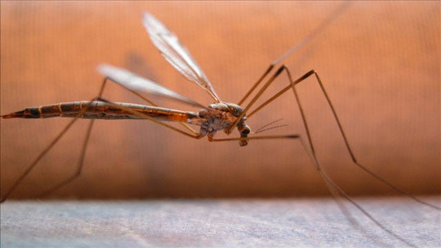 Oklahoma Horse Owners Warned About West Nile Virus