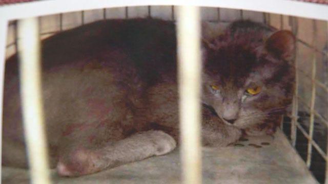 Dozens Of Cats Discovered Inside OKC Home