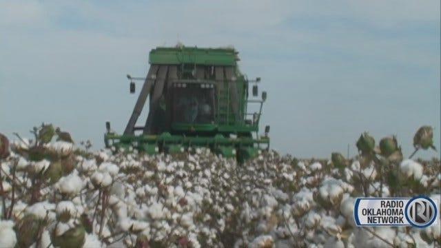 Cotton Harvest Under Way In Southwest Oklahoma