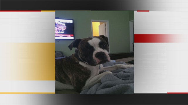 Judge Allows Bethany Bulldogs To Live, But Must Leave