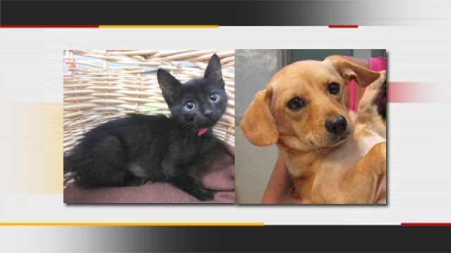 OKC Animal Shelter Waives, Discounts Adoption Fees