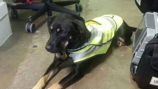 EMSA Celebrates Mascot Dog's Homecoming In OKC