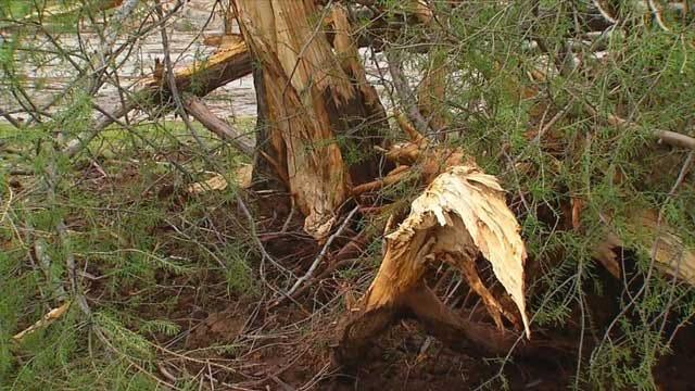 Lightning Strike Splits Tree, Breaks Windows & Water Main In OKC