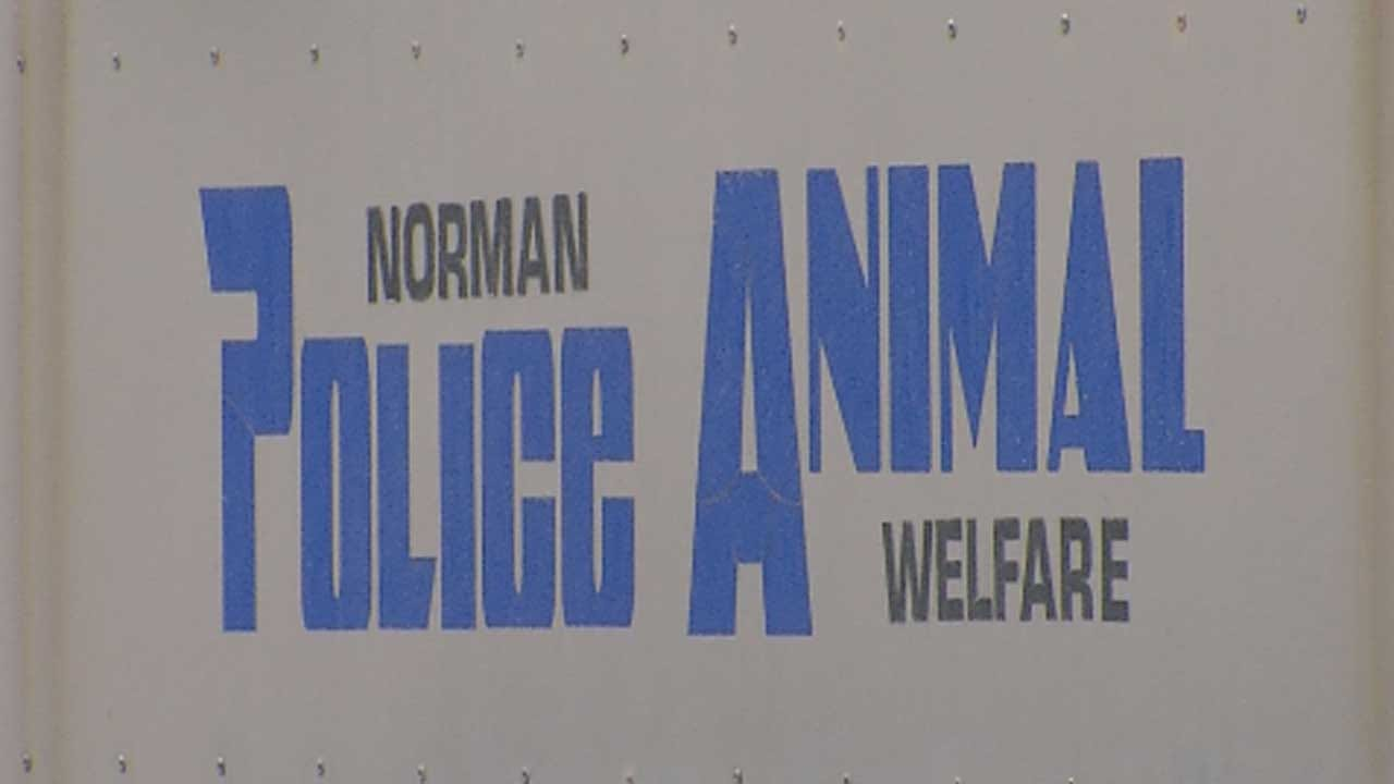 Norman Animal Welfare Implements Changes After Rise In COVID-19 Cases