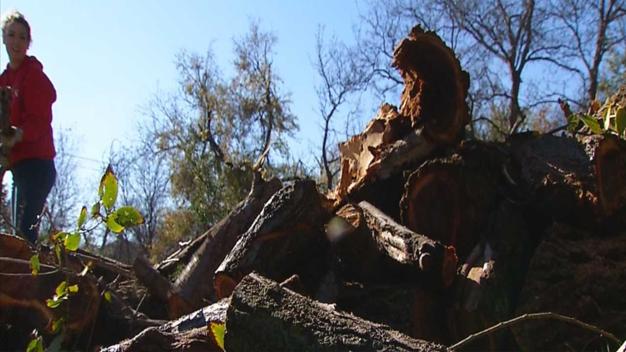 Harn Homestead Cleaning Up Debris For Annual Christmas Event