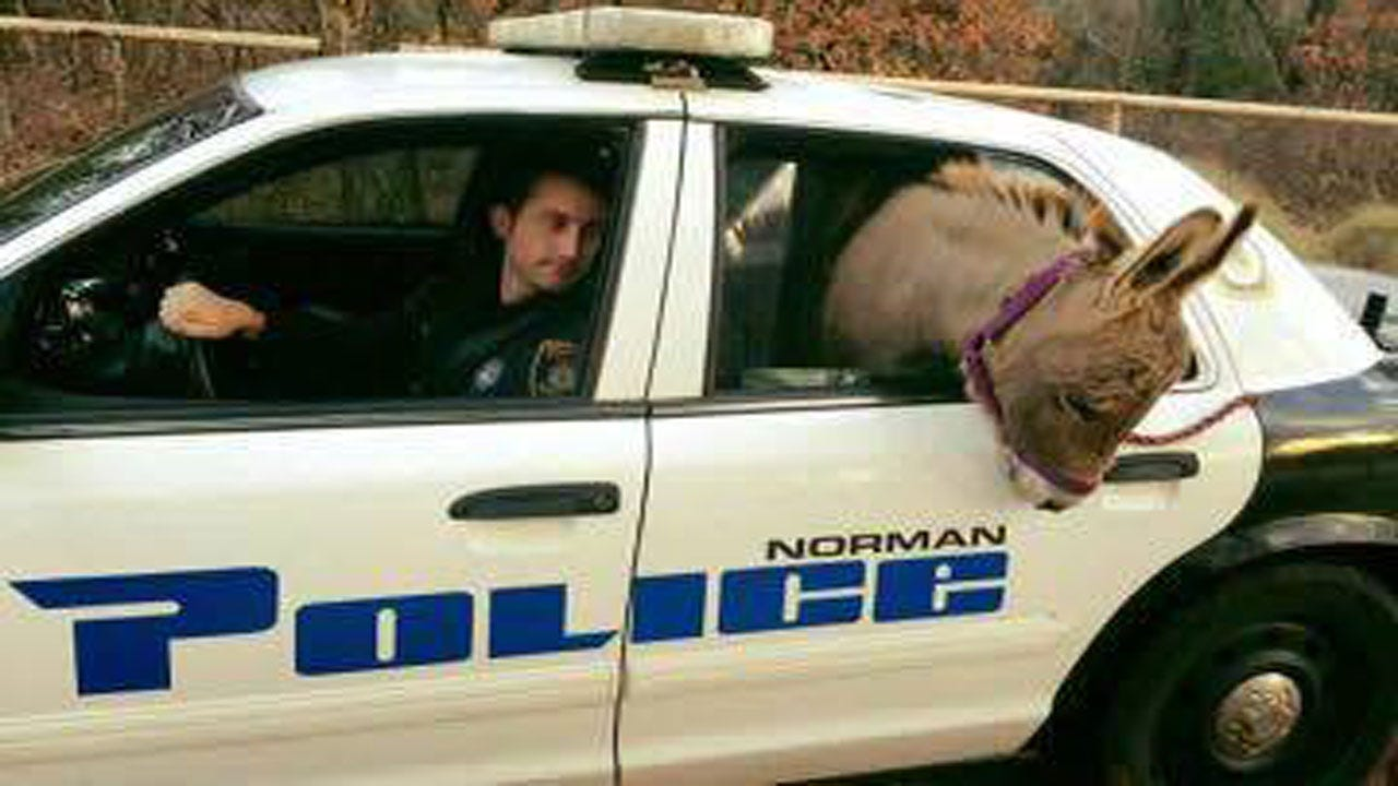 Norman Officer Rescues Donkey On The Loose