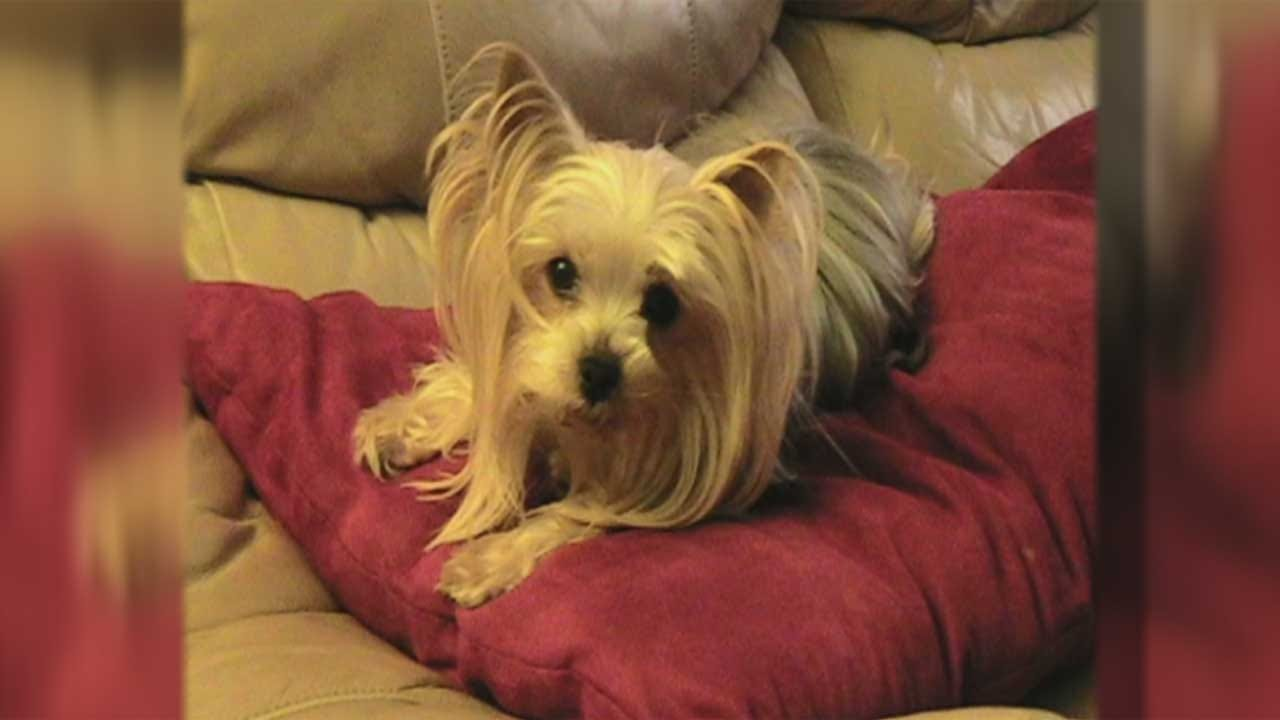 Family Reunites With Lost Dog